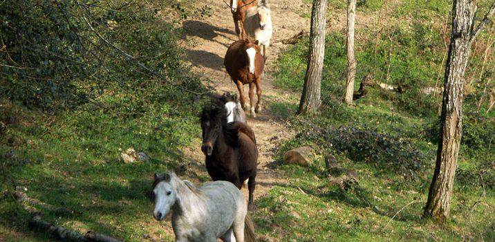 preau_paarden