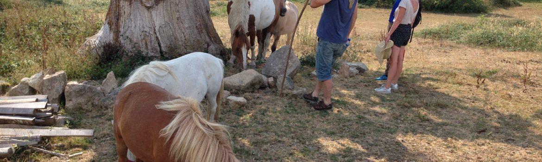 paarden_kastanjeboom